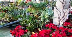 Es Bosc Centre Jardinería